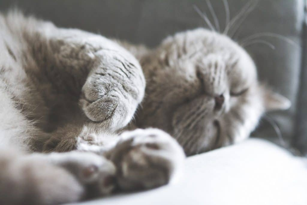 sov i varme
